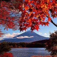 Autumn - Aki - Luruh
